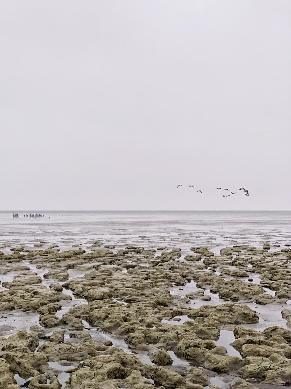 Paesens Moddergat Waddenzee