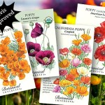 Botanical Interests Seed Giveaway Results