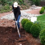 Planting Periwinkle In The Front Yard