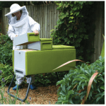 To Sting or Not to Sting – Thoughts About Keeping Honey Bees