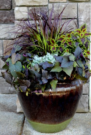 Mavis Garden Blog Ideas For Summer Container Gardening One Hundred Dollars A Month