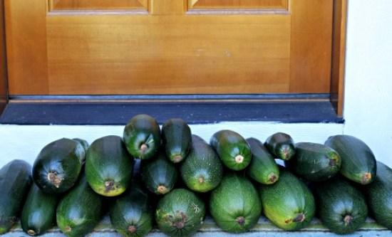 giant zucchini squash garden mavis