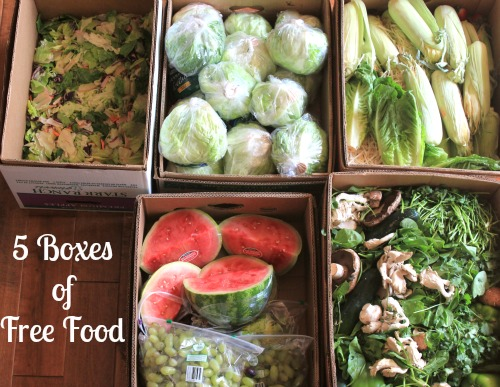 how to find free food feed your family for free