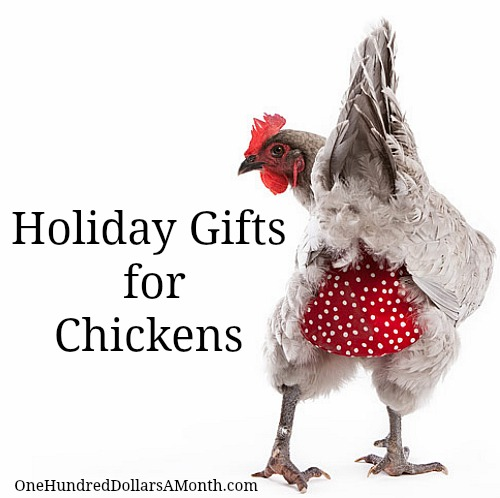 Holiday Gifts For Your Pet Chickens One Hundred Dollars