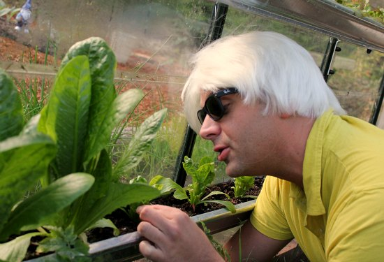 greenhouse gardening grow lettuce in gutters