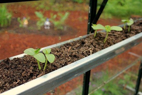 growing vegetables in gutters
