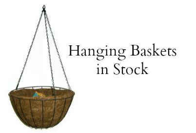 order hanging baskets online