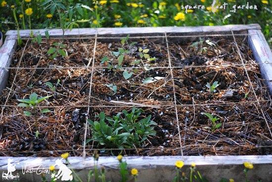 sqaure foot garden