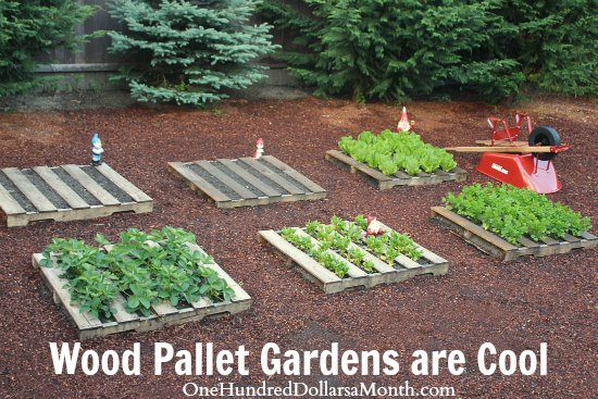 Wood pallet garden pictures lettuce strawberries celery for What to grow in a pallet garden