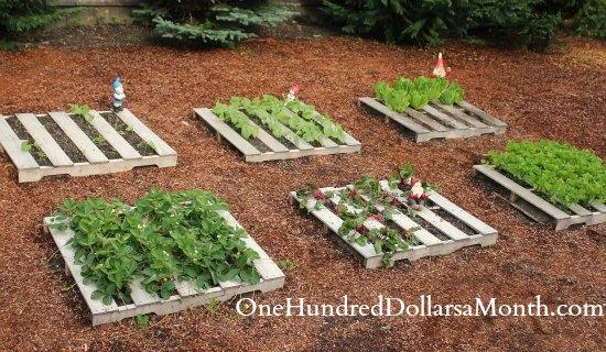 pallet garden Pictures