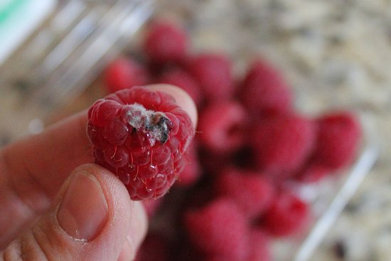 raspberry with mold