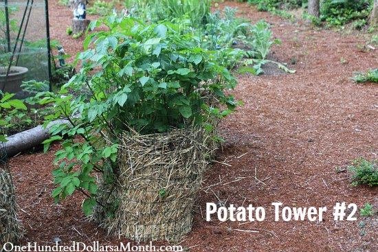 potato tower
