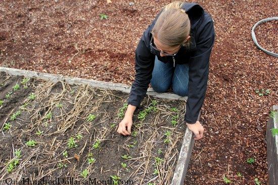 thinning plants