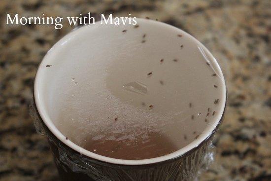 fruit flies on cup