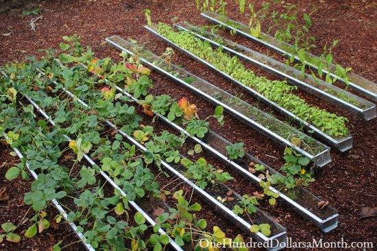 garden gutters
