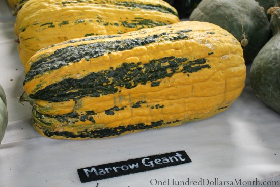 national heirloom exposition marrow geant