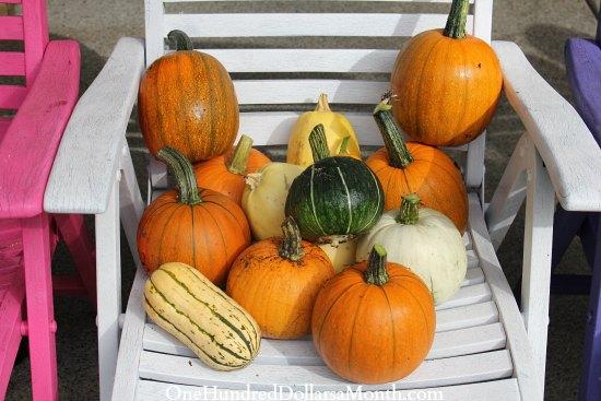 pumpkins squash