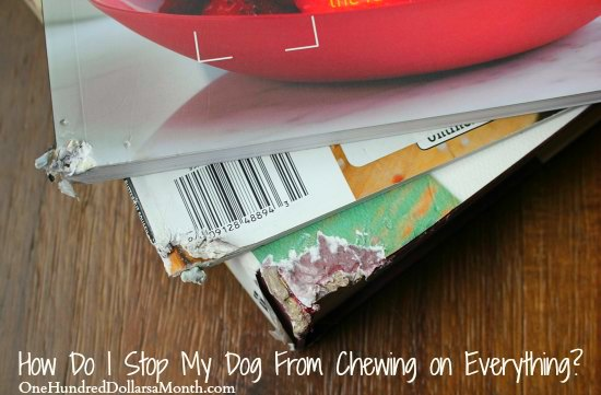 Help! How Do I Stop My Dog From Chewing on Everything