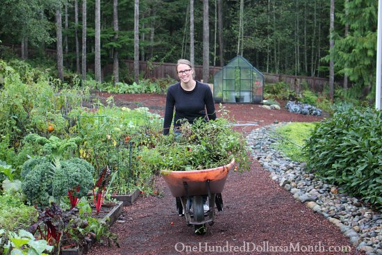 one hundred dollars a month mavis butterfield garden blog