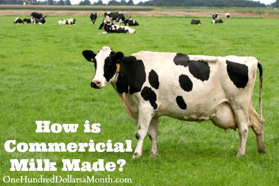 How is Commericial Milk Made