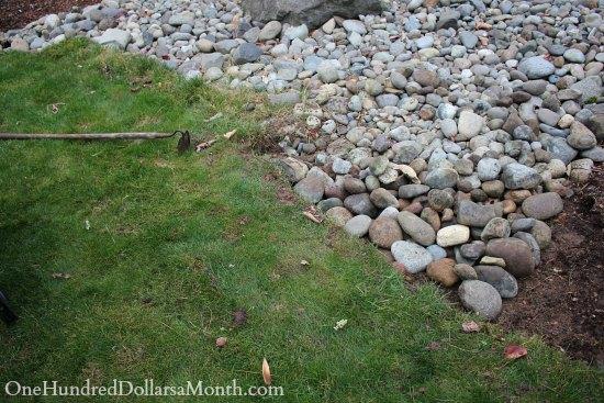 grass in rocks