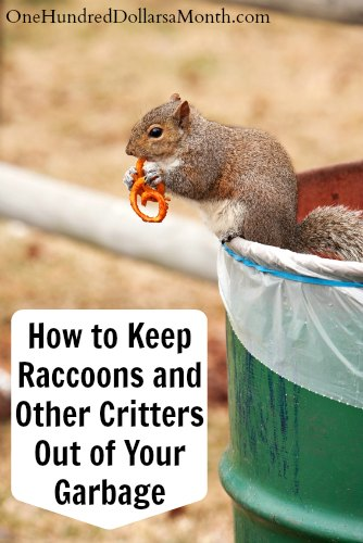How to keep raccoons and other critters out of your garbage one hundred dollars a month How to keep raccoons out of garden