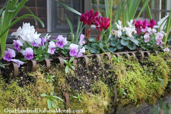 spring window box flowers