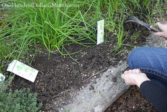 growing herbs seeds planting