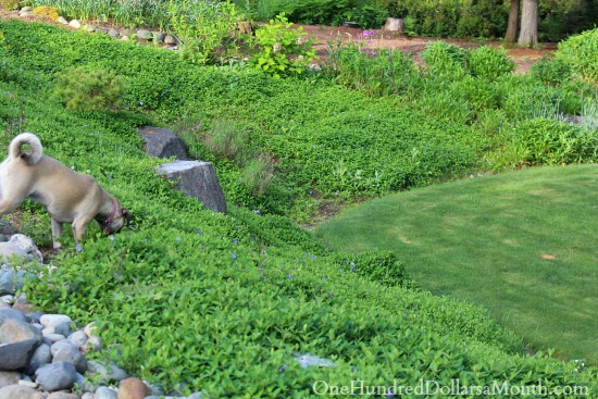 Vina Minor planted on hillside