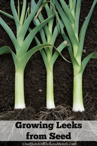 growing leeks from seed