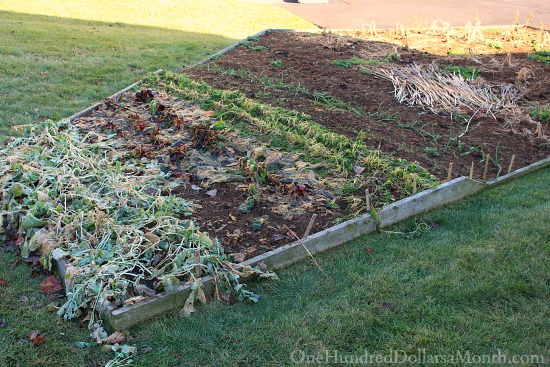 garden after snow