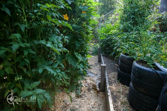 growing-vegetables-in-tires
