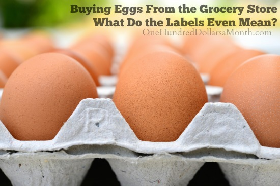 Buying Eggs From the Grocery Store - What Do the Labels Even Mean