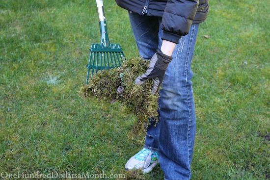 metal rake moss