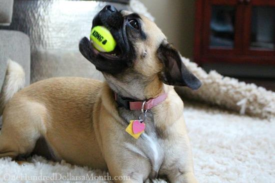 lucy the puggle dog king ball
