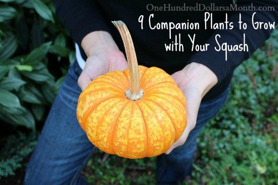 9 Companion Plants to Grow with Your Squash