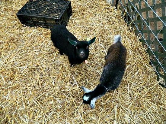 Abigail farm pictures