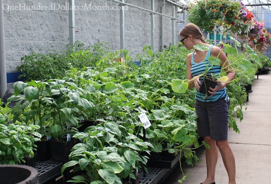 picking out plants wilco