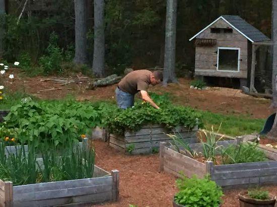 husband working in garden