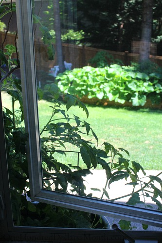 kitchen window garden