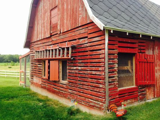 Angela from central wisconsin sends in her chicken coop for Red chicken coop