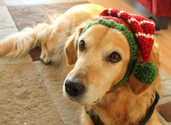 knitted dog hat