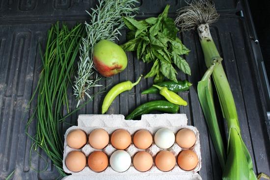 eggs garden