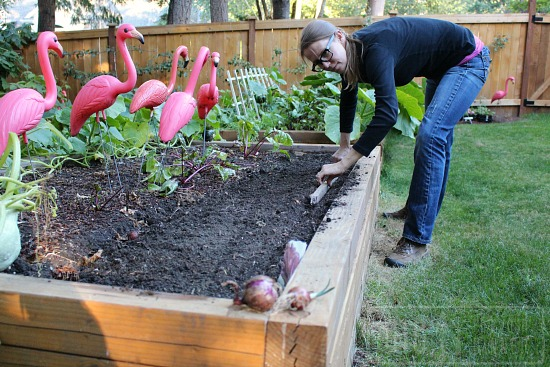 raised-gardening-beds