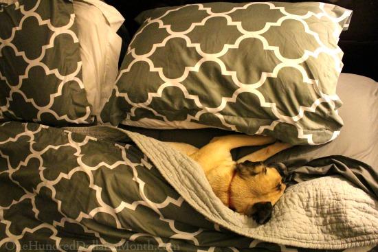 lucy-puggle-dog-sleep-nap