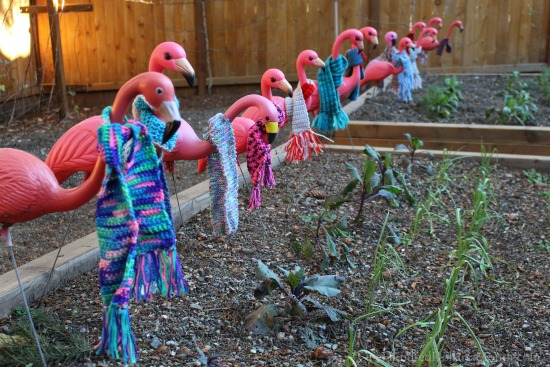 flamingos-in-scarves