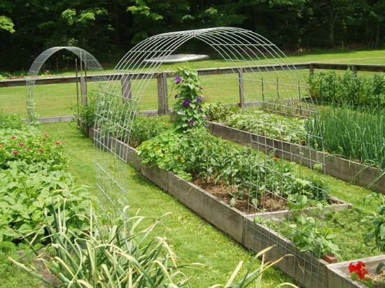 Cucumber Trellis In Garden Box