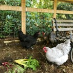 Gardening in New England – Flower Baskets and Fresh Eggs