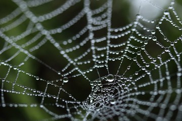 The Spider By