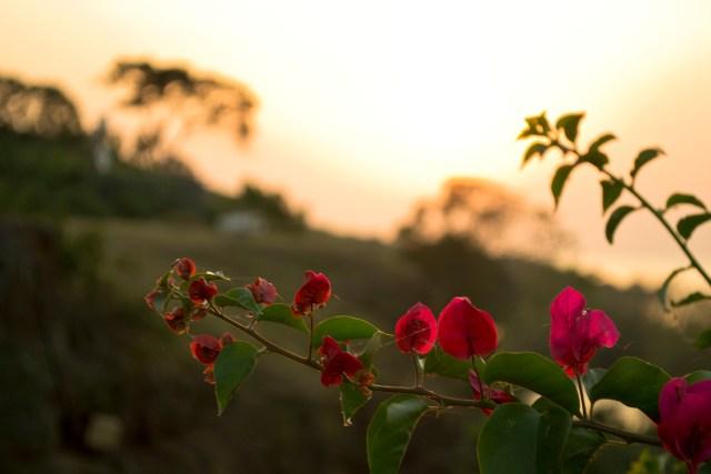 flowershoise